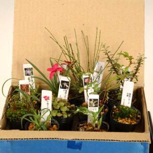 お得  :山野草10ヶセット*(まとめ割)|y-bonsai