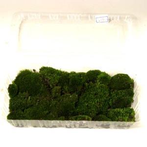 盆栽用:苔2 (パック入り)|y-bonsai