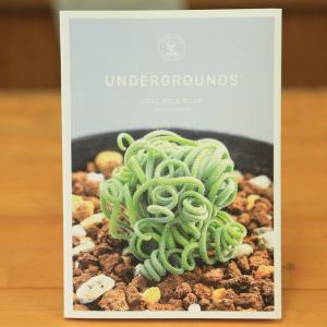 本:UNDER GROUNDS -CAPE BULB BOOK-|y-bonsai
