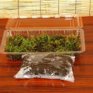 苔玉キット(天然苔)|y-bonsai