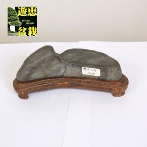 水石:瀬田川石【現品】|y-bonsai