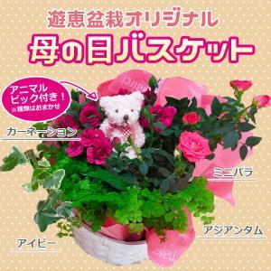 遅れてごめんね 母の日ギフト:お花バスケット*ラッピング付 ピック付き かご 寄せ植え 花鉢|y-bonsai