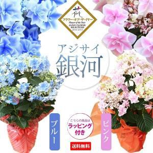 【送料無料】  (※但、北海道、沖縄への配達の場合のみ送料が発生します。)  白と青のグラデーショ...