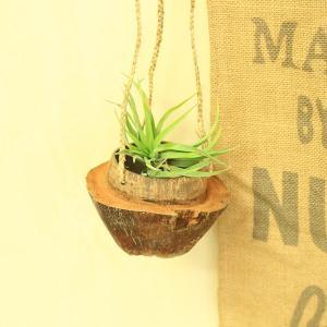 観葉植物:チランジア(品種おまかせ)×ヤシの実ハンギング*エアープランツ|y-bonsai