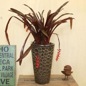 観葉植物 おしゃれ:エクメア・フォスターズ・フェイバリット*陶器鉢 受皿付 富士砂 y-bonsai