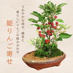 遅れてごめんね 敬老の日 盆栽:姫りんご寄せ(信楽焼鉢)*鉢植え  寄せ植え 実成り プレゼントにも|y-bonsai