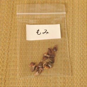 もみ 種子|y-bonsai