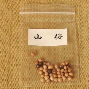 山桜 種子|y-bonsai