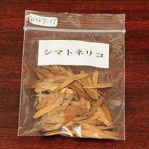 シマトネリコ 種子|y-bonsai