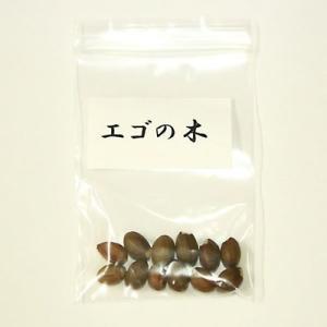 エゴの木 種子|y-bonsai