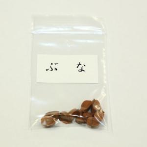 ぶな 種子|y-bonsai
