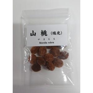 山桃(瑞光) 種子|y-bonsai