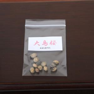 大島桜 種子|y-bonsai