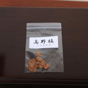 高野槙 種子|y-bonsai