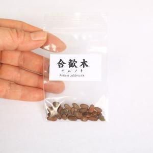 合歓木(ねむのき) 種子|y-bonsai