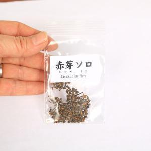 赤芽ソロ 種子|y-bonsai