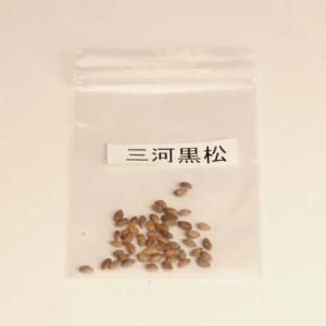 三河黒松 種子|y-bonsai