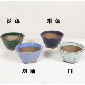 国産輪花鉢 12.5cm y-bonsai