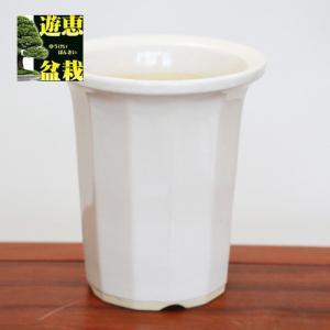 大特価:国産12角深鉢 白 6号  y-bonsai