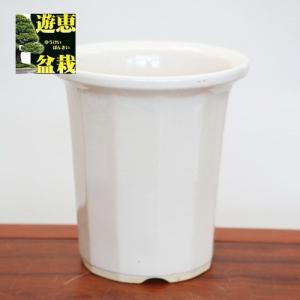 大特価:国産12角深鉢・白 7号  y-bonsai