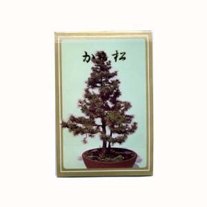 盆栽種子:から松|y-bonsai