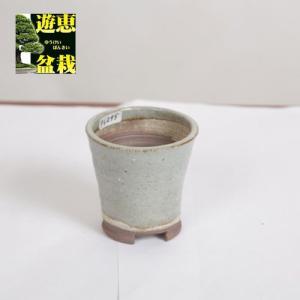 盆栽小鉢:丹山 7.4cm【現品】|y-bonsai