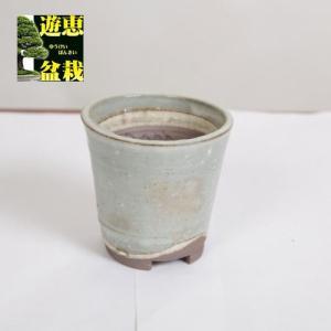 盆栽小鉢:丹山 8.8cm【現品】|y-bonsai