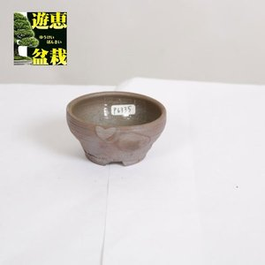 盆栽小鉢:丹波立杭焼 丹満 8cm【現】|y-bonsai