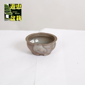 盆栽小鉢:丹波立杭焼 丹満 7.8cm【現】|y-bonsai