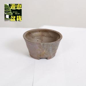 盆栽小鉢:丹波立杭焼 丹満 9.1cm【現】|y-bonsai