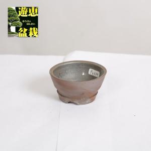 盆栽小鉢:丹波立杭焼 丹満 7.6cm【現】|y-bonsai