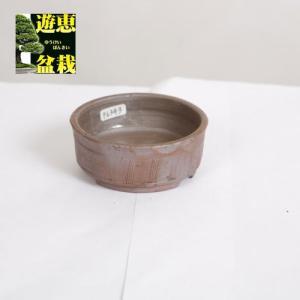 盆栽小鉢:丹波立杭焼 丹満 9.2cm【現】|y-bonsai