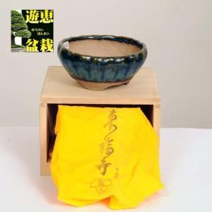 盆栽小鉢:初代 東福寺 丸鉢 9.8cm【現品】|y-bonsai