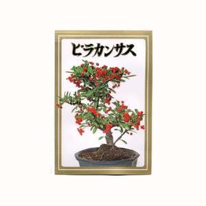 盆栽種子:ピラカンサス|y-bonsai