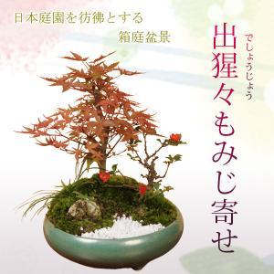 遅れてごめんね 敬老の日プレゼント 寄せ植え:出猩々もみじ寄せ盆栽 *秋 縁起 鉢植え紅葉狩り|y-bonsai