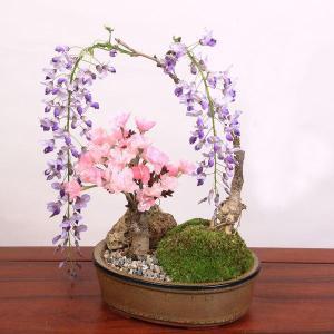 盆栽:桜・藤寄せ植え*陶器鉢*(2020年 春 開花予定) さくら ふじ お花見 誕生日 祝 旭山桜 ギフト gift プレゼントにも|y-bonsai