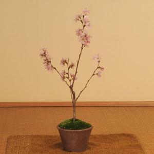 早咲き:啓翁桜盆栽(けいおうさくら・瀬戸焼小鉢)*2020年 春 開花予定|y-bonsai