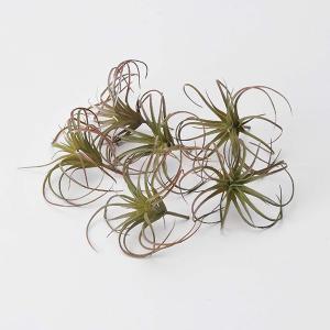 《 造花 グリーン 多肉植物 》Asca/アスカ ☆エアプランツ (1袋6本入) グリーンレッド|y-hanabishi