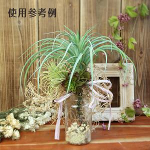 《 造花 グリーン 多肉植物 》Asca/アスカ ティランドシア y-hanabishi 03
