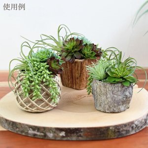 《 造花 グリーン 多肉植物 》Asca/アスカ ティランドシア y-hanabishi 04