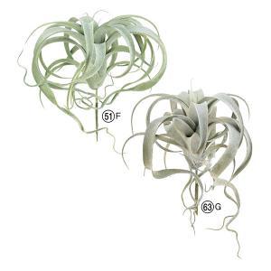 《 造花 グリーン 多肉植物 》Asca/アスカ キセログラフィカ|y-hanabishi