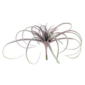 《 造花 グリーン 多肉植物 》Asca/アスカ ティランドシア グリ-ンレッド|y-hanabishi