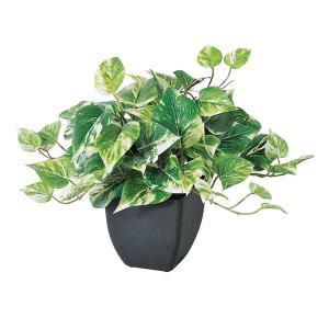 《 造花 グリーン  観葉植物 》Asca/アスカ ポトスブッシュ (ポット付) ヴァリゲイトグリーン y-hanabishi