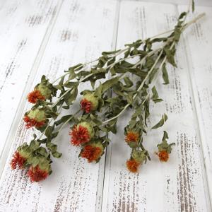 染料や食用油としても有名な国産紅花です。 ぷっくりとした形と鮮やかな黄色の花が目を引きます。 ※葉の...