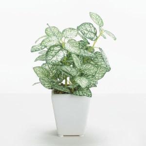 《 造花 グリーン  観葉植物 》花びし/ハナビシ ペペロミアポット グリーン/ホワイト y-hanabishi