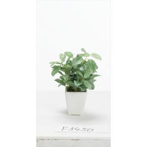 《 造花 グリーン  観葉植物 》花びし/ハナビシ フィットニアミニポット グリーン/ホワイト y-hanabishi