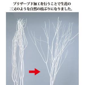 《 ドライフラワー 》大地農園/オオチノウエン 三又ソフト(約100cm) 白|y-hanabishi|03