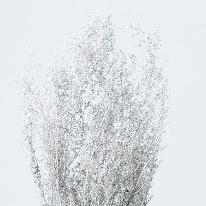 《 プリザーブドフラワー 》★即日出荷★大地/オオチノウエン(ソクジツ) シャワーグラス プラチナシルバー|y-hanabishi