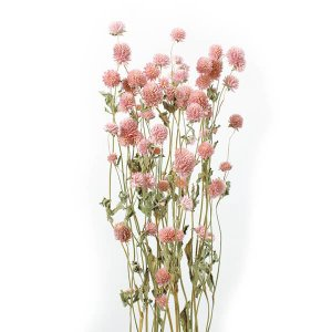 《 ドライフラワー 》★即日出荷★大地/オオチノウエン(ソクジツ) 千日紅 ピンク