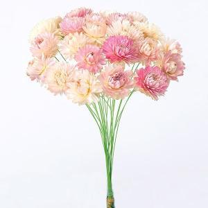 《 ドライフラワー 》★即日出荷★大地/オオチノウエン(ソクジツ) ヘリクリサム・小(ワイヤー付) ピンク y-hanabishi